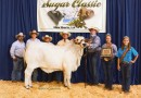 Louisiana Sugar Classic Reserve Intermediate Champion - 2015