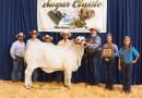 Louisiana Sugar Classic Reserve Intermediate Champion - 2015